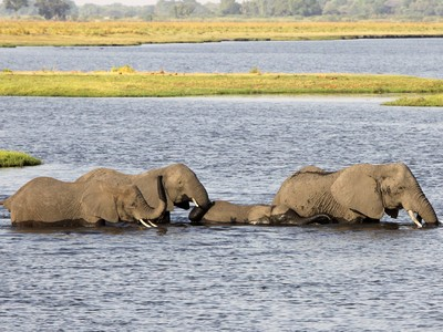 Chobe Fluss - Chobe Nationalpark